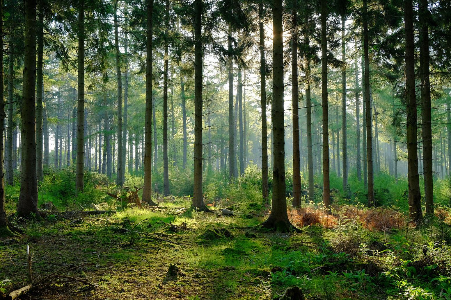 stock-forest-wood-england-UK